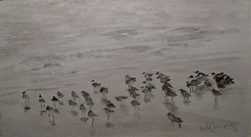 birdsonthebeach